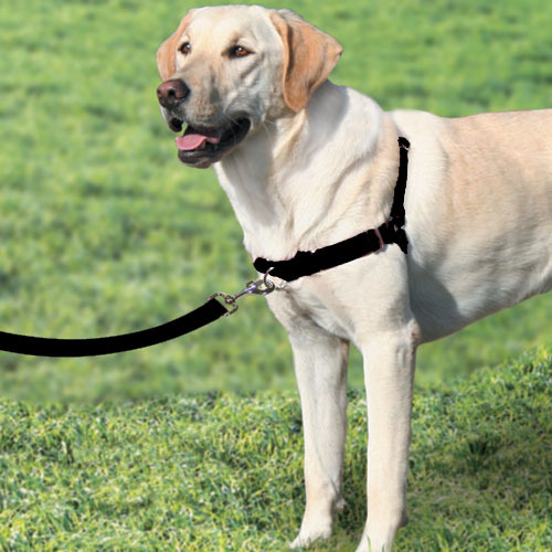 Easy Walk Leader Harness For Dog