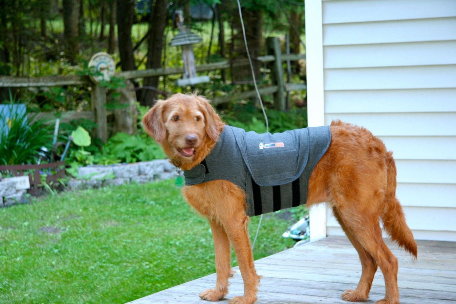 anti anxiety vest for dogs. Black Bedroom Furniture Sets. Home Design Ideas