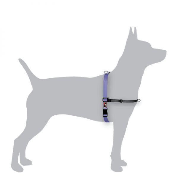 Black Dog Balance Halter