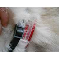Pheromone Collars For Dogs Australia