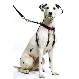 Sporn Halter Harness - The Safe & Humane Dog Halter