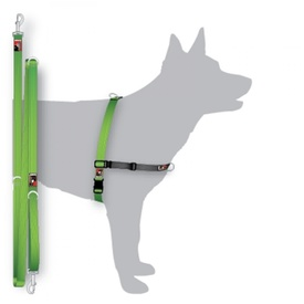 Black Dog Balance Halter & Lead Training Pack - Green