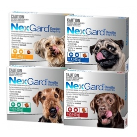 Nexgard Flea & Tick Chew for Dogs - 3 Pack