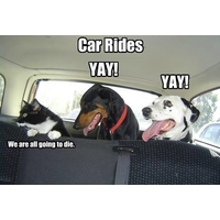 Planning a road trip with your pets