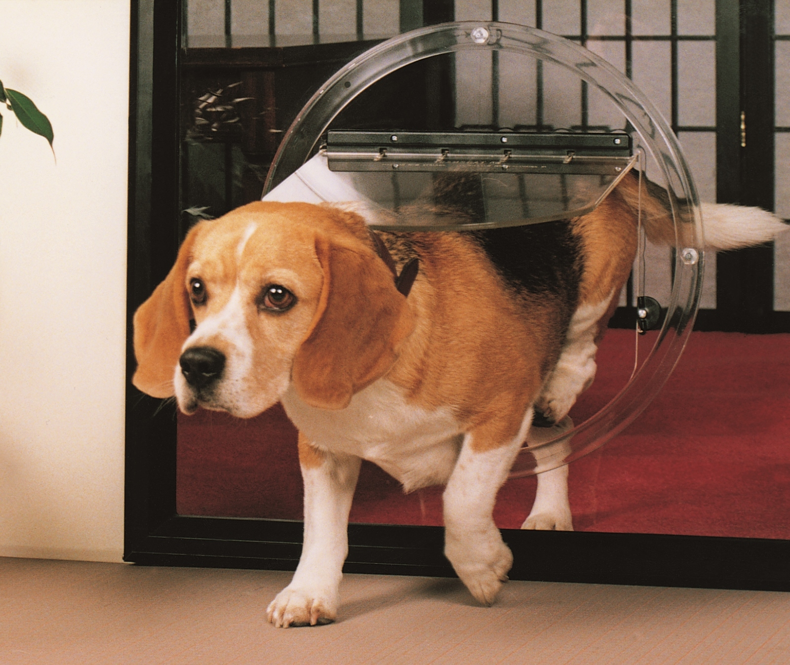 Transcat Pet Door for Cats & Dogs - Large Door for Glass image 0