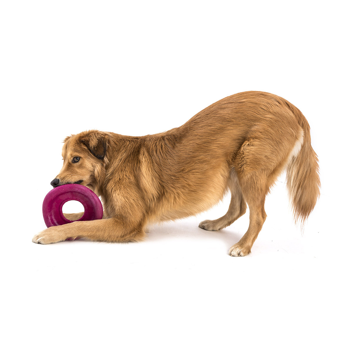 West Paw Dash Zogoflex Textured Fetch Flying Disk Dog Toy  image 9