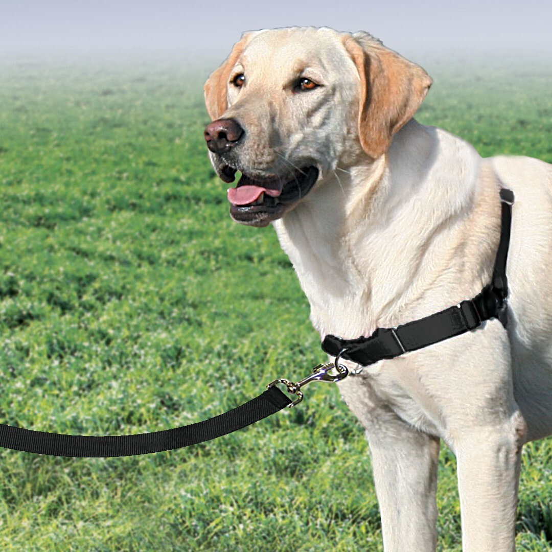 Petsafe Easy Walk Front-Attachment Harness and Lead Set image 2