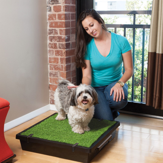 The Original Pet Loo for Indoor or Outdoor Use - 3 Sizes image 3