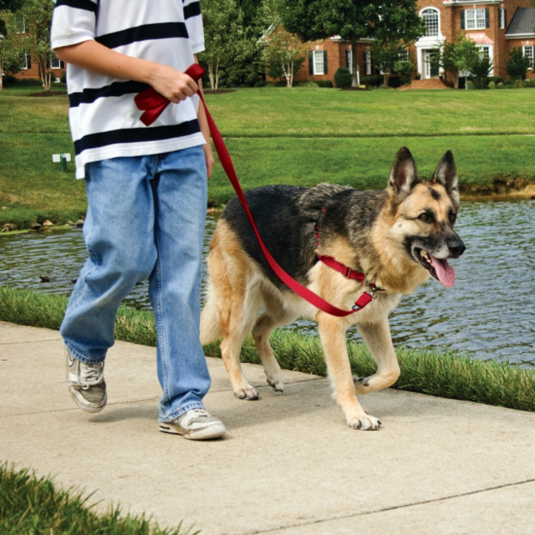 Petsafe Easy Walk Front-Attachment Harness and Lead Set image 6