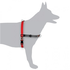 Black Dog Balance Dog Halter with Front & Back attach D-Rings - Mini - Red