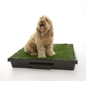 The Original Pet Loo for Indoor or Outdoor Use - 3 Sizes