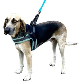 Sporn Easy Fit Comfort No-Pull Harness in Blue